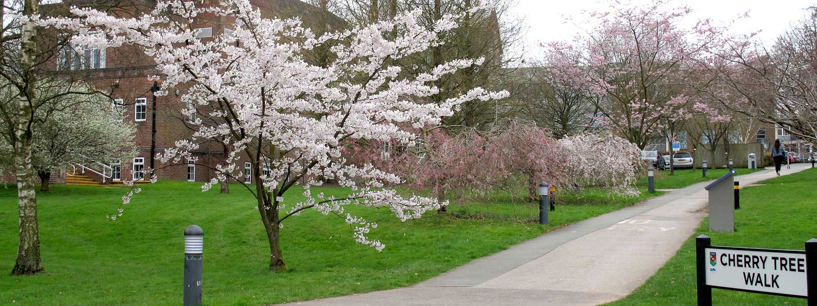 National collection of flowering cherries
