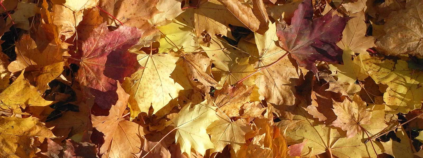banner image with autumn leaves