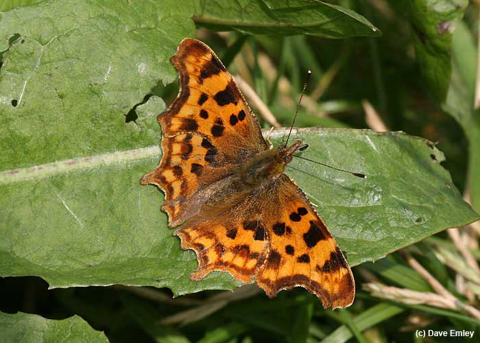 Comma upperside