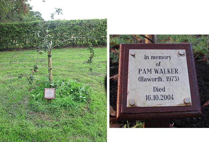 Pam Walker tree and plaque