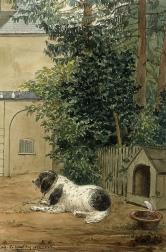 Guy the House Dog at Cheverells, Hertfordshire, 1847, watercolour by Charlotte Augusta Sneyd [SW 4]