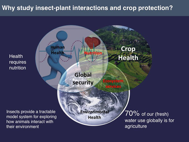 why study insect-plant interactions