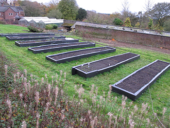 Allotment beds