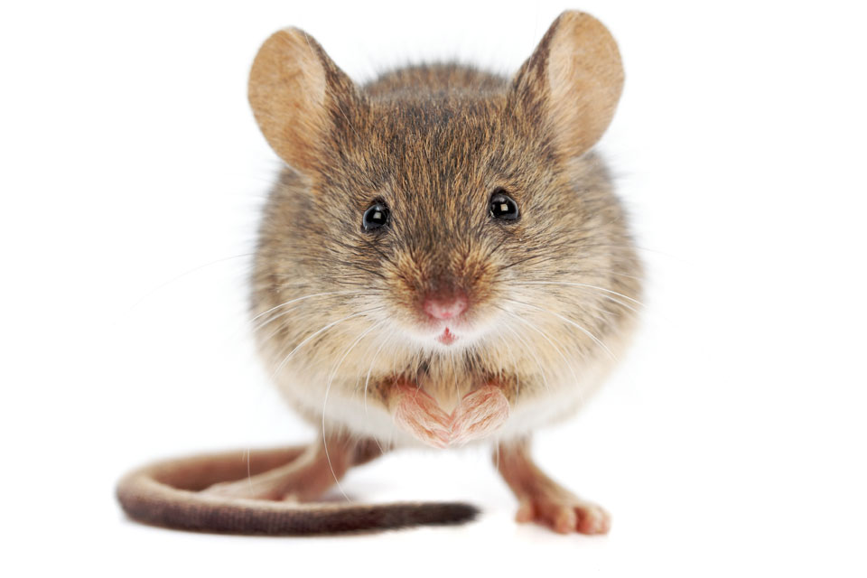 Here's what that house proud mouse was doing – plus five other animals who take cleaning seriously