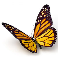 Monarch butterfly icon image