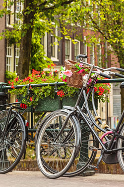 bikes and flowers